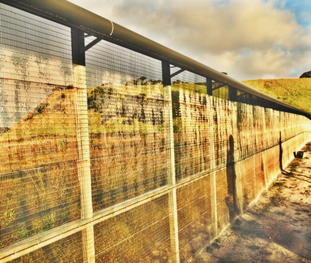 Pest Proof Fence at Tawf. Photo Credit: Carrie Schuman