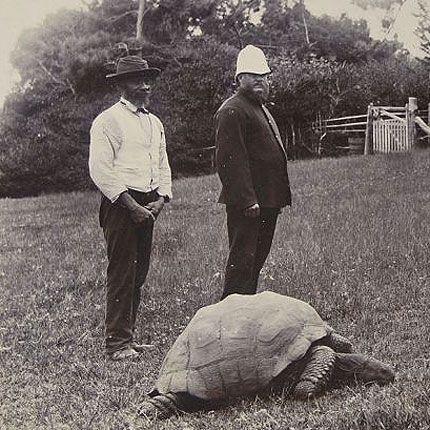 jonathan-the-tortoise-1900