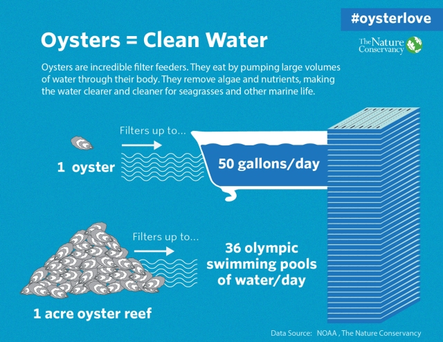 oysterlove-021